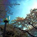 Photos: 情景_春の翳-01a