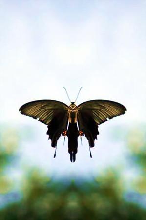 蝶の宙-01