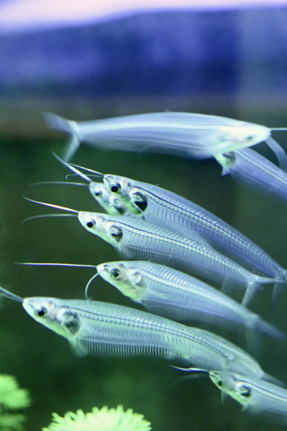 Photos: 熱帯魚のMRI?