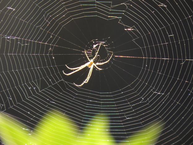 蜘蛛のア-ト (網)