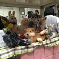 Photos: あめさん展示