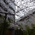 Photos: 鴎外荘
