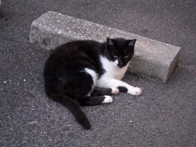 _140905 023 黒白猫