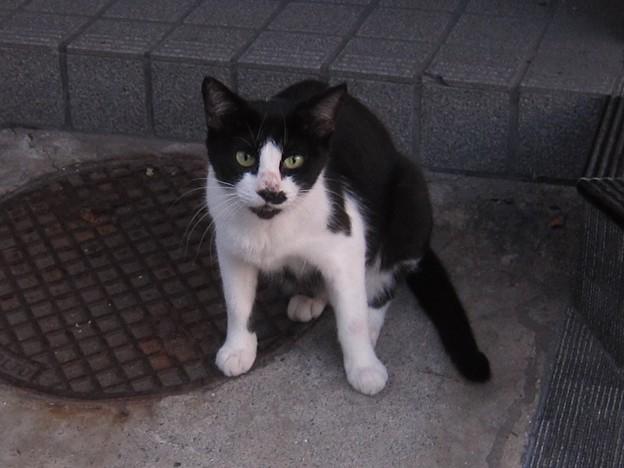 _140905 016 黒白鉢割れ猫