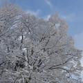 白く染まり空晴れゆく・・・