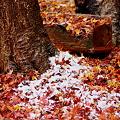 落葉に少しの雪