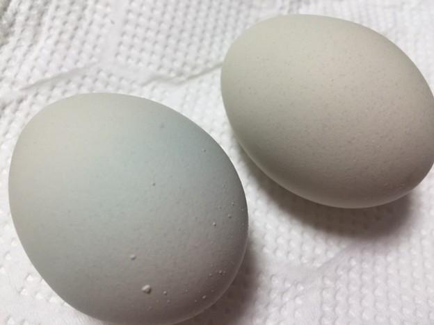 写真: 青い卵