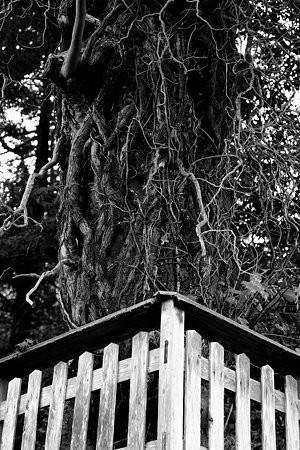 吸収する木