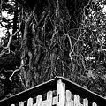 Photos: 吸収する木