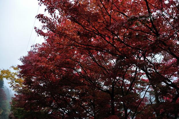DSC_3060 中山七里の紅葉その2