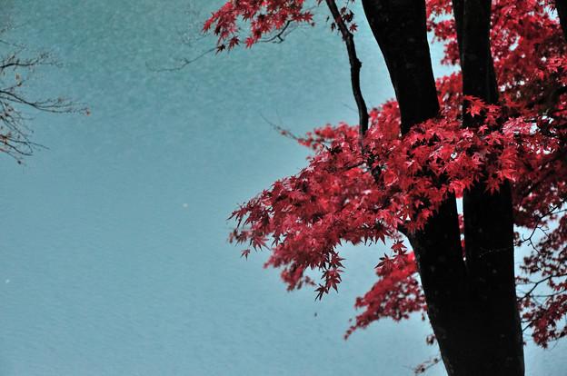 DSC_3062 中山七里の紅葉その3