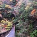 吊り橋:みたらい渓谷16