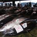和歌山県勝浦漁港06