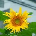 写真: お花カレンダーは既に夏♪