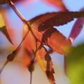 Photos: 秋の陽
