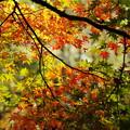 D100で綴る、秋の彩り 03