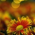 WONDER FLOWER GARDEN 03