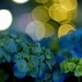 WONDER FLOWER GARDEN 04
