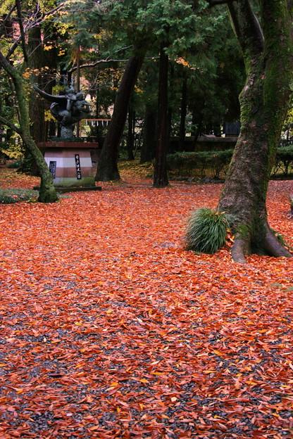 写真: 尾山神社 落ち葉の絨毯
