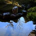 写真: 高台寺 池に映る風景