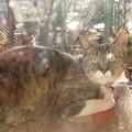 Photos: 名古屋市で迷い猫を探している方いませンニャか?