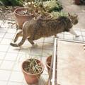Photos: ソーっと、ソーッと立ち去る迷子の猫さんニャ。