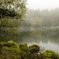 霧の御射鹿池