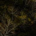 写真: 晩秋の彩3