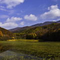 写真: 秋景大沢沼
