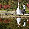 写真: 新婚さん