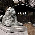 狛ライオン