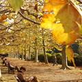 Photos: Autumn in Tokyo