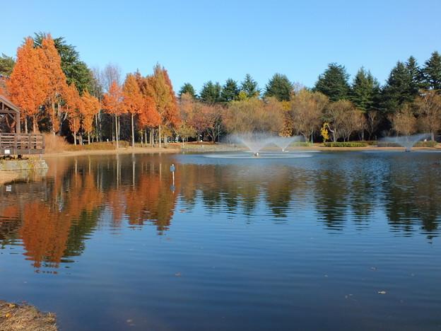 彩の森公園782