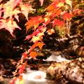 Photos: the  秋