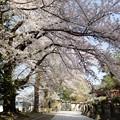Photos: 弘前・金剛山 最勝院 (3)