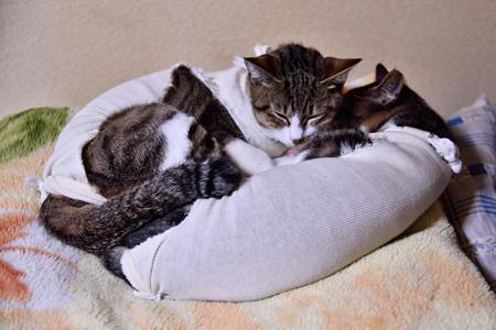 一緒にお寝んねにゃん♪