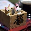 Photos: 福猫さん