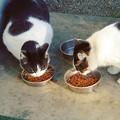写真: kontenten興業の猫さんたちに・・・