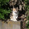 Photos: 某所で火星猫と云えば・・・
