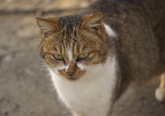 お屋敷の火星猫