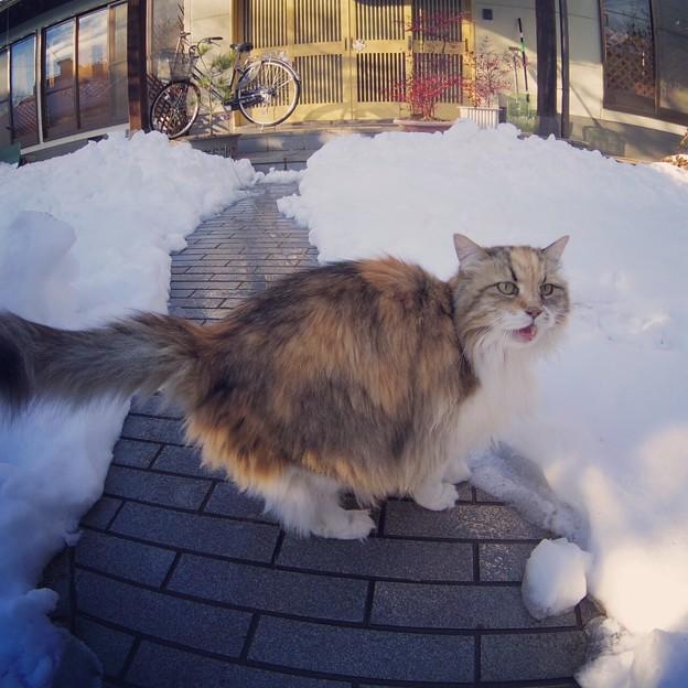 大雪にアキ姉もビックリ