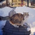 Photos: 大雪にアキ姉もビックリ