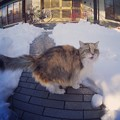 写真: 大雪にアキ姉もビックリ
