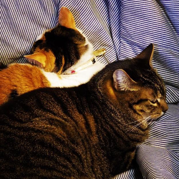 珍しい猫団子