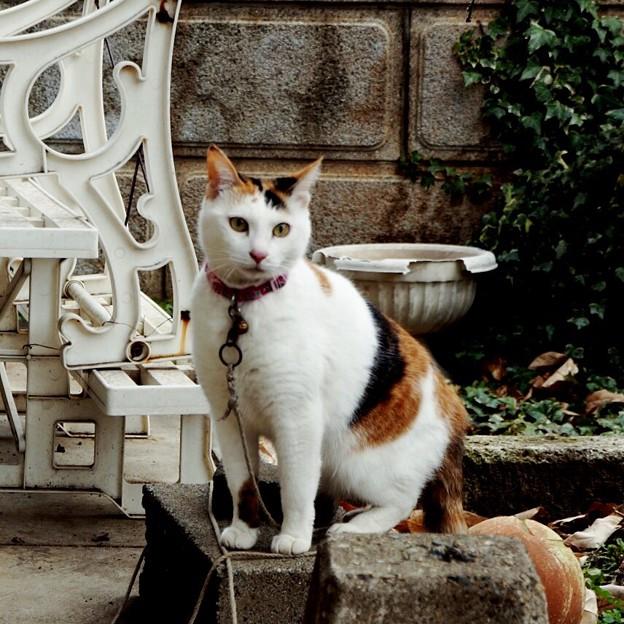 写真: 某所の猫たちは、お休みニャ!!