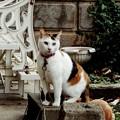 Photos: 某所の猫たちは、お休みニャ!!