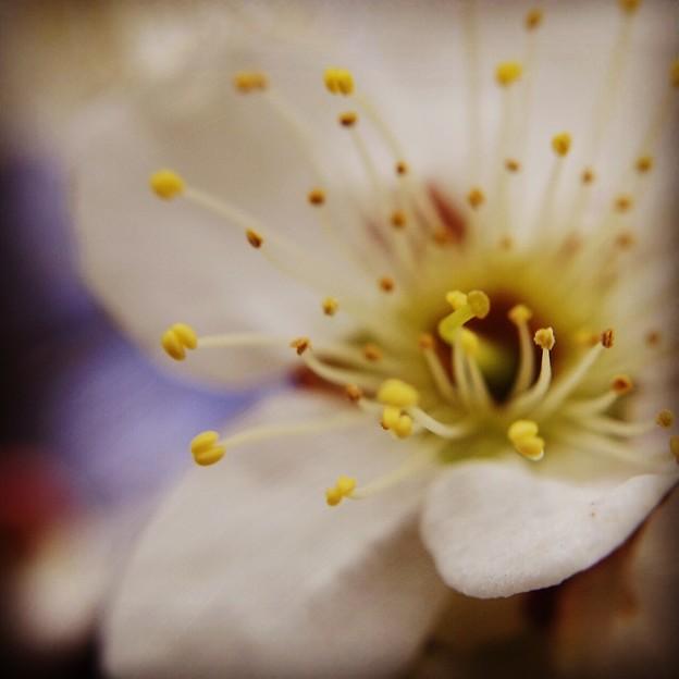 リハビリでお花を撮りました。