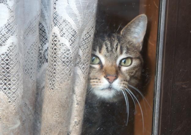臆病な窓際猫