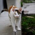 Photos: 可愛い方の火星猫も・・・