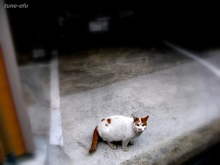 猫に会った